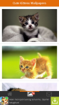 Free Cute Kittens Wallpapers screenshot 2/6
