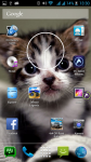 Free Cute Kittens Wallpapers screenshot 6/6