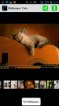 HD Wallpaper Cats screenshot 1/4