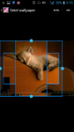 HD Wallpaper Cats screenshot 3/4
