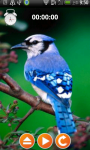 Ringtones and Sounds-Birds screenshot 1/5