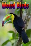Weird Birds  screenshot 1/3