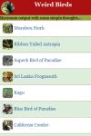 Weird Birds  screenshot 2/3