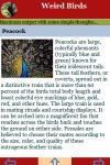 Weird Birds  screenshot 3/3