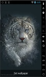 White Bengal Tiger Live Wallpaper screenshot 1/3