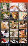 Cats Puzzles screenshot 3/6