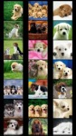 Dogs Wallpapers by Nisavac Wallpapers screenshot 1/5