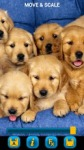Dogs Wallpapers by Nisavac Wallpapers screenshot 3/5