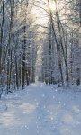 Amazing Winter weather Wallpaper screenshot 4/6