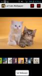 Lol Cats Wallpaper screenshot 1/4