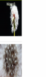 Pretty dandelion macro Wallpaper HD screenshot 3/3