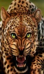 Fiery Panther Live Wallpaper screenshot 1/3