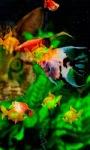Colorful Fishes LWP screenshot 1/3