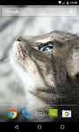Cat Live Wallpaper HD screenshot 1/5