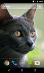 Cat Live Wallpaper HD screenshot 2/5