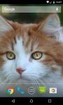 Cat Live Wallpaper HD screenshot 4/5