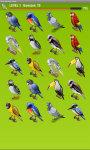 Birds Memory Game Free screenshot 5/5
