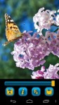 Butterfly Wallpapers by Nisavac Wallpapers screenshot 3/6