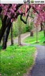 Sakura Drops Live Wallpaper screenshot 1/5