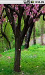 Sakura Drops Live Wallpaper screenshot 2/5