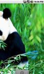 Real Panda Live Wallpaper screenshot 3/4