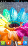 Rainbow Roses Rainbow Flowers Live Wallpaper screenshot 1/5