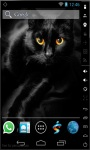 Gorgeous Black Cat LWP screenshot 1/2