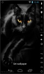 Gorgeous Black Cat LWP screenshot 2/2