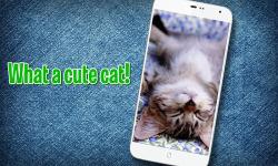 Pat a Kitten screenshot 1/3