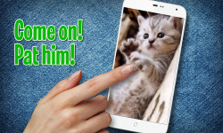 Pat a Kitten screenshot 2/3