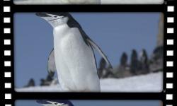 Slideshow Video FotoDream Free screenshot 5/5