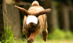 Animal Photo Editor screenshot 4/6