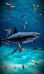 Shark attack lwp Free screenshot 2/5
