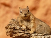Cute Squirrel Wallpaper  screenshot 2/6