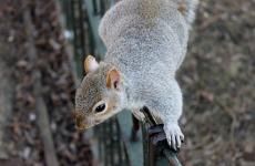 Cute Squirrel Wallpaper  screenshot 3/6
