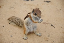 Cute Squirrel Wallpaper  screenshot 6/6
