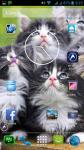 Cat Wallpaper Border screenshot 6/6