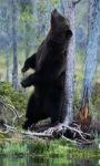 Forest Bear Live Wallpaper screenshot 2/3