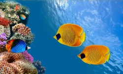 3d HD Live Fish Wallpaper screenshot 2/6