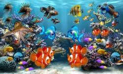 3d HD Live Fish Wallpaper screenshot 3/6