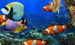 3d HD Live Fish Wallpaper screenshot 4/6