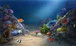 3d HD Live Fish Wallpaper screenshot 5/6