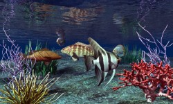 3d HD Live Fish Wallpaper screenshot 6/6