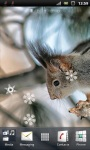 Winter Squirrel Live Wallpaper screenshot 1/2