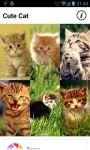 Cute Cool Cat Wallpaper Flickr screenshot 1/4