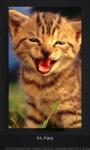 Cute Cool Cat Wallpaper Flickr screenshot 2/4