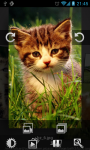 Cute Cool Cat Wallpaper Flickr screenshot 4/4