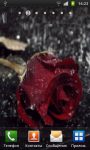 A lonely rose in the rain screenshot 1/2