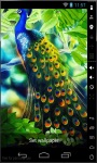 Gorgeous Peacock Live Wallpaper screenshot 1/2