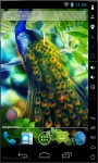 Gorgeous Peacock Live Wallpaper screenshot 2/2